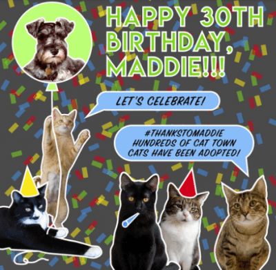 Promotional cat graphic celebrating Maddie's birthday.
