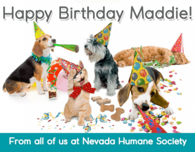 Nevada humane society dogs and cats celebrate Maddie's birthday.