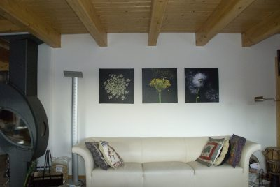Flower photos hung on a wall.