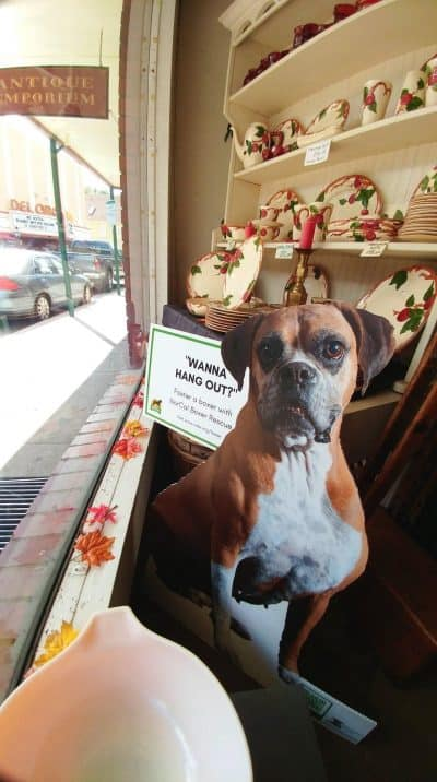 Cutout of brown boxer in front window display at Antique Emporium.