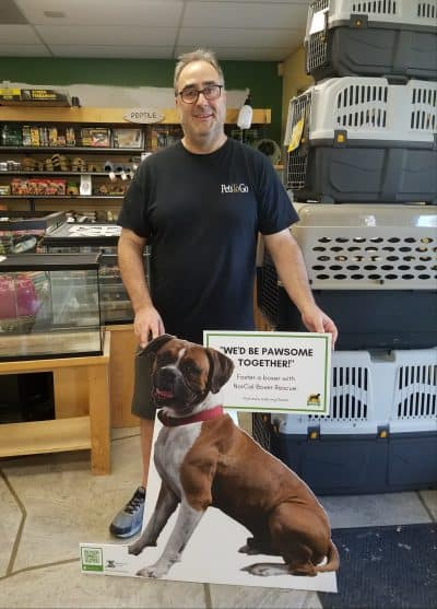 Man with cardboard cutout of brown and white boxer at Pets To Go store.