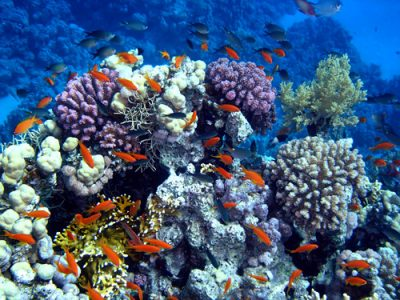 Colorful marine life around a coral reef.