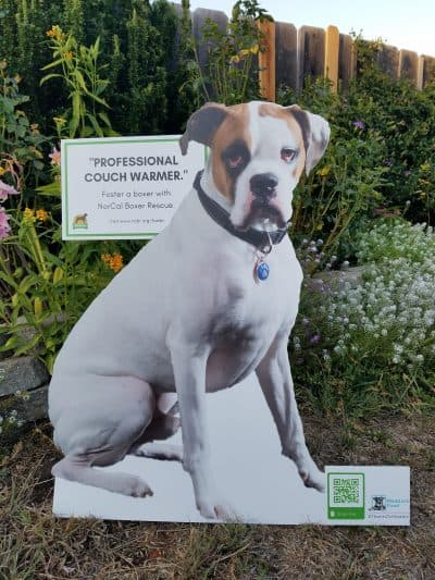 "White boxer cutout with ""professional couch warmer"" sign."